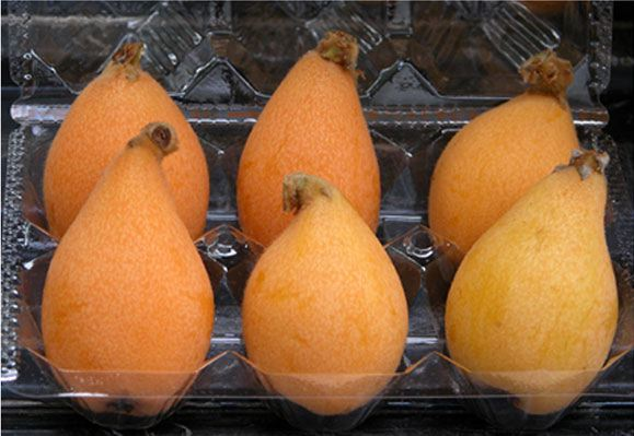 The loquat is steeped in tradition and ancient Chinese mythology.