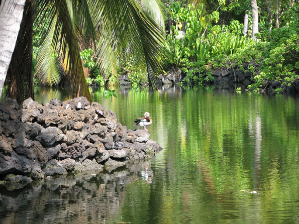 """Award-winning recordist Gordon Hempton spent 18 months capturing the sounds and songs around Kona Village Resort, resulting in a 30-minute CD called """"Sounds of the Village, Natural Melodies of Kaupulehu."""" (Photo by Karin Stanton/Hawaii247.com)"""