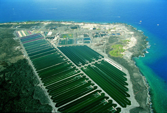 New cultivation strategy produces super Hawaiian Spirulina