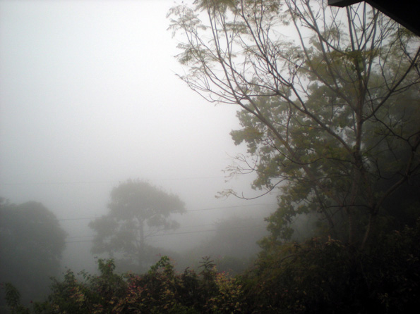 By 4 p.m., the mist crept closer, almost obliterating the trees. (Hawaii247.com photo by Karin Stanton)
