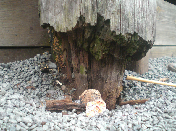 The base of an ohia post at Kamakana Children's Playground. The park has become unsafe for children and is undergoing a massive renovation. (Photo courtesy of Cliff Kopp)