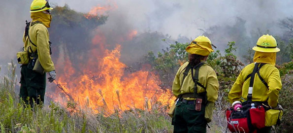 Weather permitting, Hawai'i Volcanoes National Park will conduct a prescribed burn at Kealakomowaena, located near the end of Chain of Craters Road, on Wednesday, June 3, 2009.