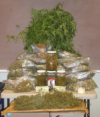 Indoor marijuana growing operations busted