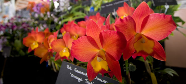 The orchid show and sale continues at Edith Kanaka'ole Stadium in Hilo on Sunday (Aug 9) from 10 a.m. to 3 p.m.