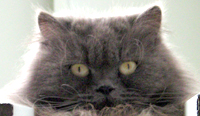 Keaau animal rescue organization needs your vote