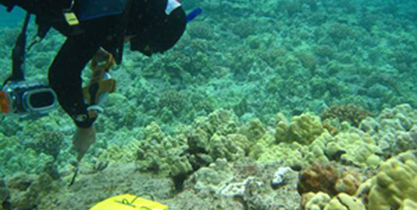 Cornell grad student embarks on three-year study of West Hawaii coral reefs and the diseases that afflict them