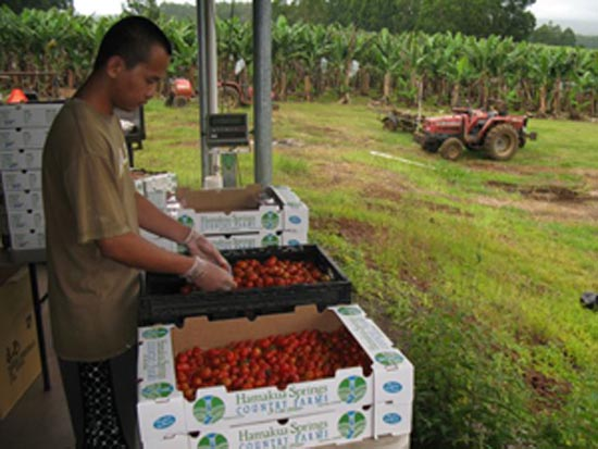 County Ag Plan: Building a local food system