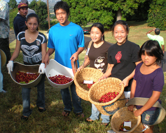 Youngsters show off their baskets after their turn in the coffee orchard. (Hawaii 24/7 photo by Karin Stanton)