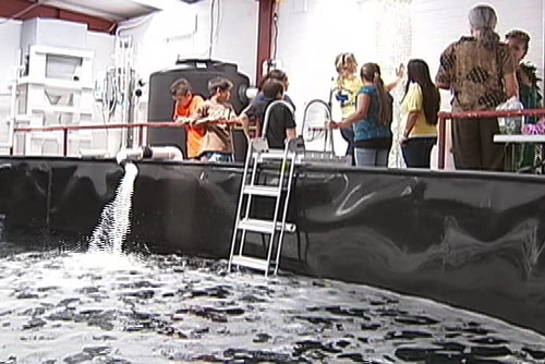 The facility's 25,000-gallon saltwater pool at UH-Hilo's Pacific Aquaculture and Coastal Resources Center is authorized by NOAA Fisheries to house 18 species of whales and dolphins, up to 20 feet long and can accommodate 1-2 small whales or dolphins at a time.