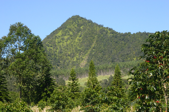 Sponsor and vendor opportunties still available for second annual event that celebrates nearly 50 coffee farms in Ka'u