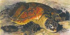 Gupton teaching watercolor workshop (April 21-24)