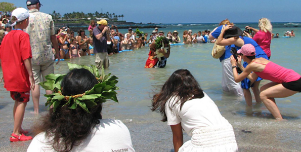 Seven green sea turtles, or honu, are released into the ocean after being raised in the hote's saltwater ponds