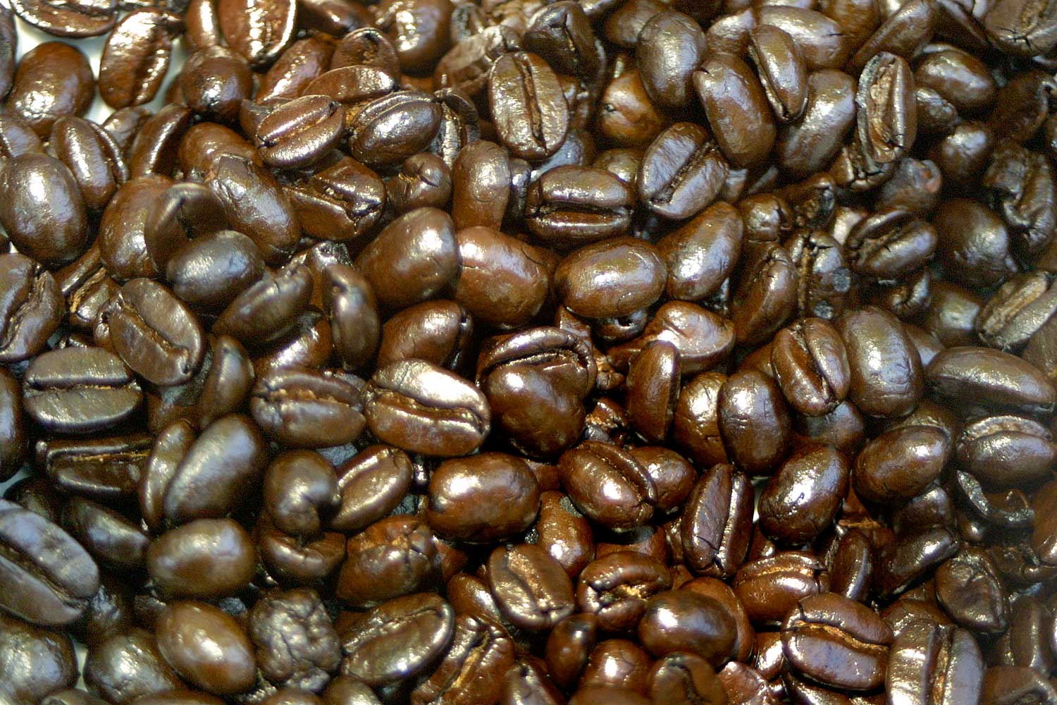 UH seeks coffee farmers for CBB survey