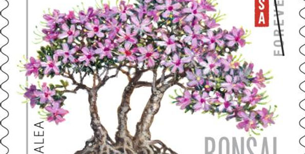 Bonsai series depicts sierra juniper, trident maple, black pine, azalea and banyan