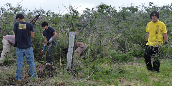 Dryland habitat restoration project provides forest stewardship opportunities within the Villages of LaiOpua