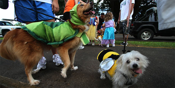The Hawaii Island Humane Society Halloween Pet Walk paraded around Queen Liliuokalani Gardens in Hilo Saturday (Oct 29) and Kona on Sunday.