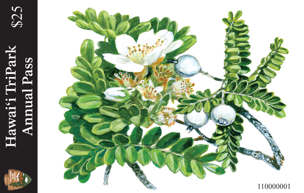 The 2012 edition of the federal Interagency Recreation Pass and the annual Hawai'i TriPark Pass are now on sale – just in time for the holidays. The 2012 TriPark Pass features artwork of  'ulei by Hilo artist John Dawson. A member of the rose family, 'ulei is a sprawling native shrub that grows in all three parks.