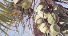 New website lists art, craft classes in Kona