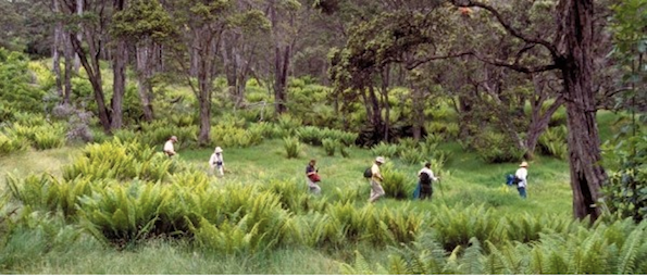 Hakalau forest adventure (Photo courtesy of Hawaii Forest & Trail)