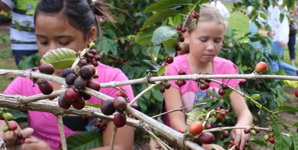 (Photo courtesy of Kona Coffee Cultural Festival)