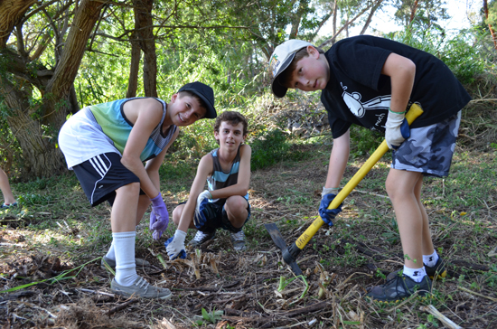 Parker students help Waimea Trails and Greenways by removing roots and stumps in preparation for a new footbridge near the Waimea Nature Park. (Photo courtesy of Parker School)