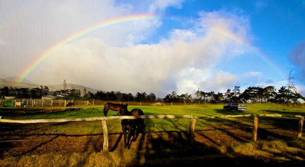 The weather outside was a little rainy but more delightful than frightful on Christmas Day in Waimea. Photography by Baron Sekiya | Hawaii 24/7