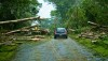 A car makes its way up Makuu Drive in Hawaiian Paradise Park after crews and volunteers cut a path through fallen trees brought down from Tropical Storm Iselle. Photography by Baron Sekiya | Hawaii 24/7