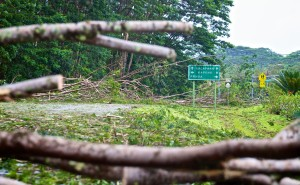 Highway 130 in Puna was closed due to trees and debris blocking the roadway from Tropical Storm Iselle Friday, August 8, 2014. Photography by Baron Sekiya | Hawaii 24/7