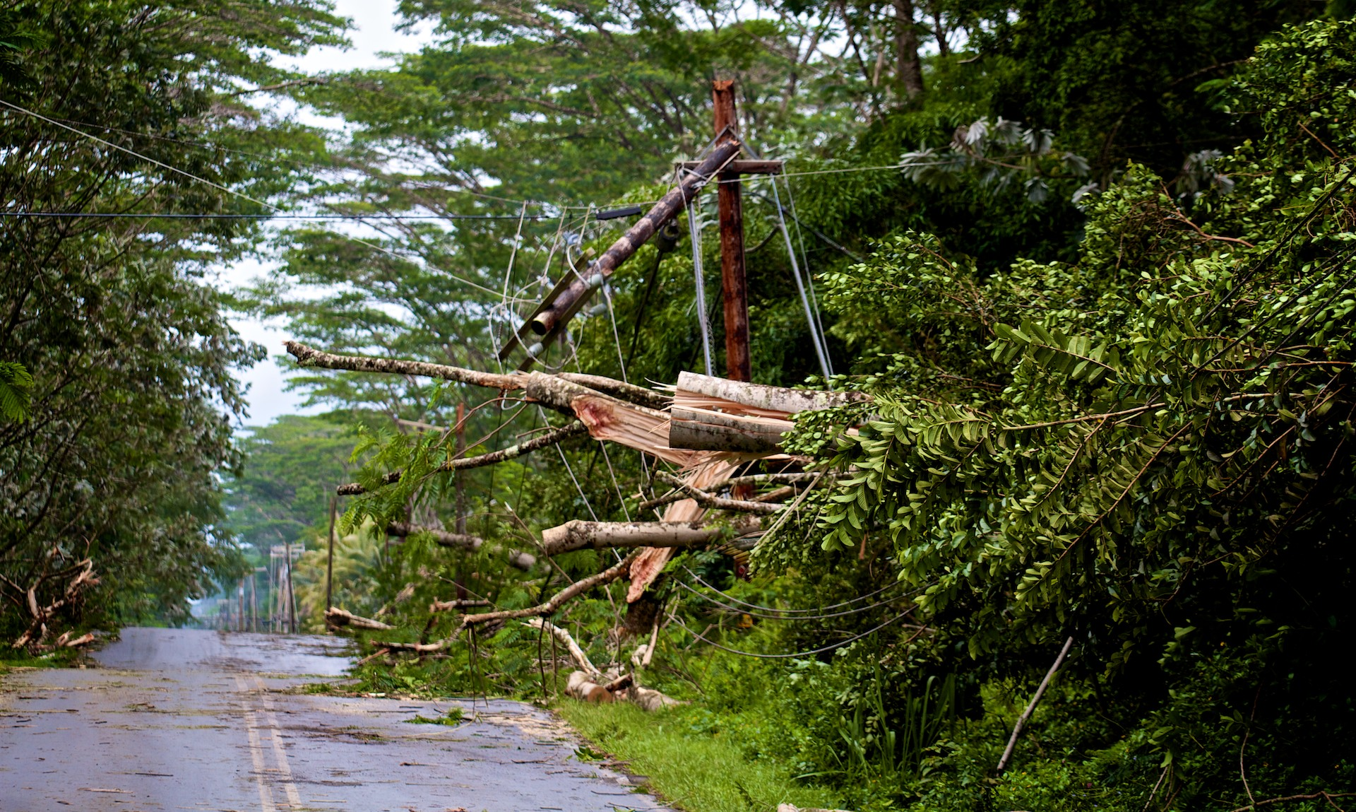 Trees toppled by Tropical Storm Iselle crashed onto utility lines and snapped poles in Hawaiian Paradise Park early Friday morning, August 8, 2014. Here trees alongside Makuu Drive crashed down. Photo by Baron Sekiya | Hawaii 24/7