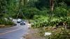Many trees down, utility poles snapped and lines down along Highway 132 Kapoho Road. Photography by Baron Sekiya | Hawaii 24/7