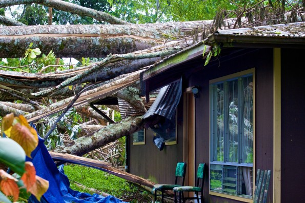 A home in Hawaiian Beaches was crushed by an Albizia tree fallen from Tropical Storm Iselle. Image taken August 21, 2014. Photography by Baron Sekiya   Hawaii 24/7