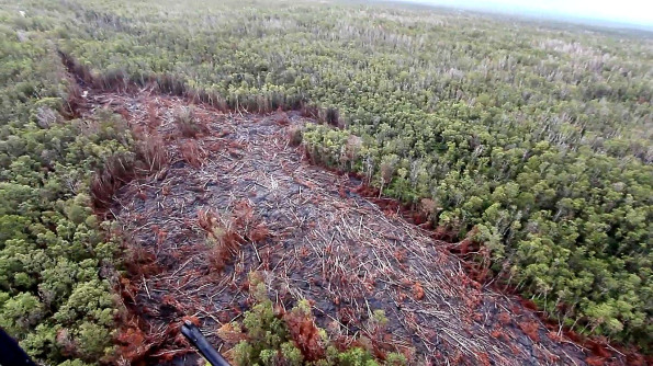 Looking upslope from the lava flow front where the flow had exited a ground crack and widened in the forest. Photo taken September 20, 2014. Photography by Baron Sekiya | Hawaii 24/7, Air Transportation by  Paradise Helicopters