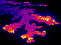 A thermal image of the flow front, which consisted of several lobes moving through thick vegetation on Friday, October 10, 2014. Yellow and white areas are active breakouts on the surface, while the red and purple areas are cooling crust. Photo courtesy of USGS/HVO