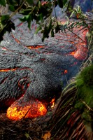 A pāhoehoe toe oozes out of the northern margin of the June 27th lava flow in thick forest, about 300 meters (328 yards) upslope of the leading edge of the flow on Saturday, November 1, 2014. Photo courtesy of USGS/HVO