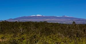 A snow-capped Mauna Kea beyond the Ohia forest seen from the Daniel K. Inouye Highway Sunday, January 4, 2015. Photography by Baron Sekiya | Hawaii 24/7