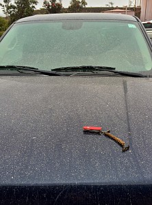 A faint dusting of volcanic ash, produced by a small rockfall-triggered explosion in the Kīlauea summit lava lake on April 25, 2015, fell on this car parked near Jaggar Museum. Light rainfall afterward caused the ash to clump. USGS photo.