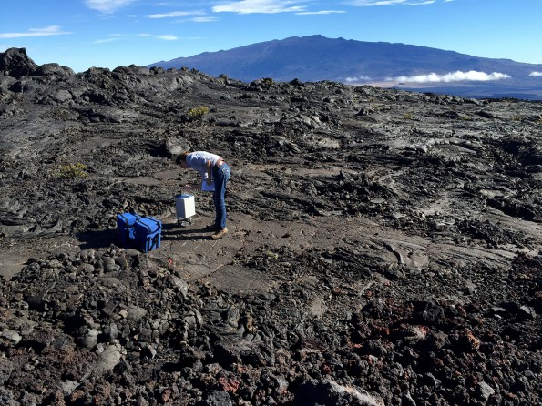 USGS Hawaiian Volcano Observatory geophysicist Ingrid Johanson measures gravity with a gravimeter on the slope of Mauna Loa with Mauna Kea visible in the background. USGS photo.