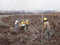 Park staff install the cat-proof fence in rough and rugged high-elevation lava fields on the slopes of Mauna Loa. The five-mile-long fence protects more than 600 acres of Hawaiian petrel habitat, and could be the longest of its kind in the United States. Photo courtesy of National Park Service.