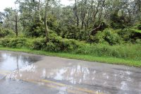 Puddles of ashy rain water. NPS Photo