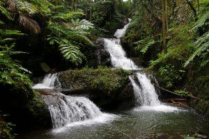 Hawaii Island streams  where Tahitian Prawns are found. Photo courtesy of DLNR