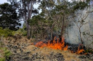 Fire burns native forest in Hawaii Volcanoes National Park as firefighters engage in suppression efforts. NPS Photo/Mark Wasser
