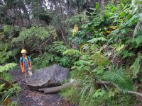 Large boulder fallen onto Byron's Ledge near Kilauea Iki trail. NPS Photo