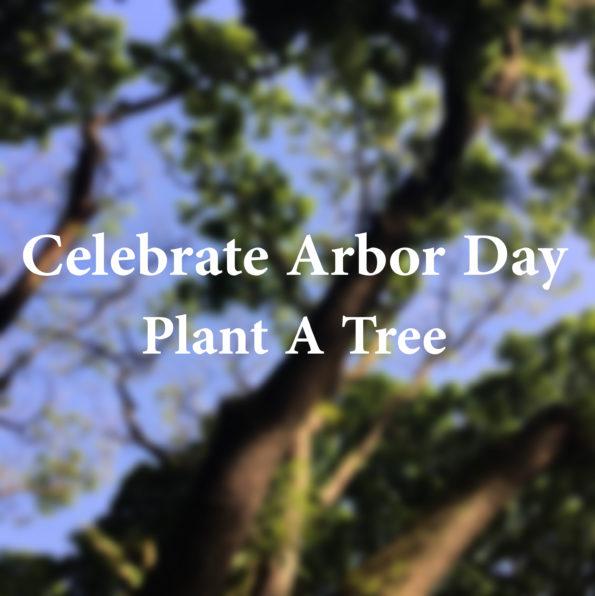 Celebrate Arbor Day, Plant A Tree